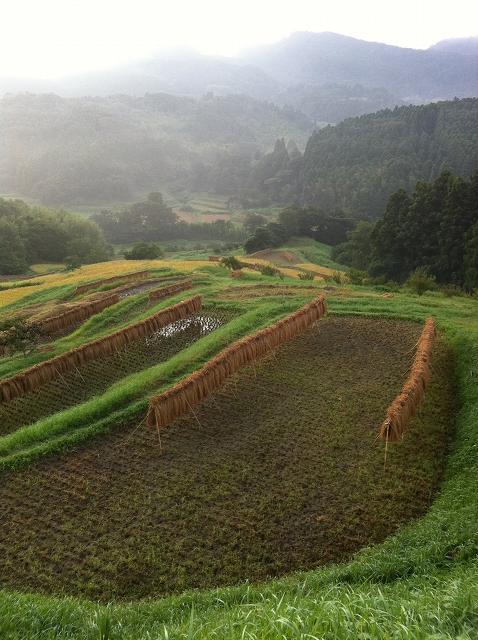収穫の朝 4_f0018464_627627.jpg
