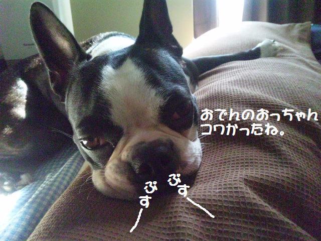 ★犬が吠えちゃダメなの? ・・・母ちゃんの思うコト★_d0187891_153331.jpg