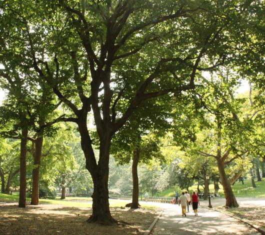 初秋のセントラルパークをお散歩してリラックス_b0007805_8361712.jpg