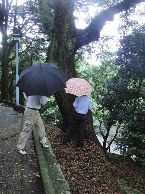 吉原公園再整備検討ワークショップが始まりました_f0141310_833134.jpg
