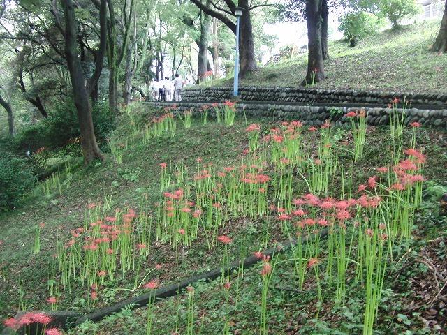 吉原公園再整備検討ワークショップが始まりました_f0141310_834624.jpg