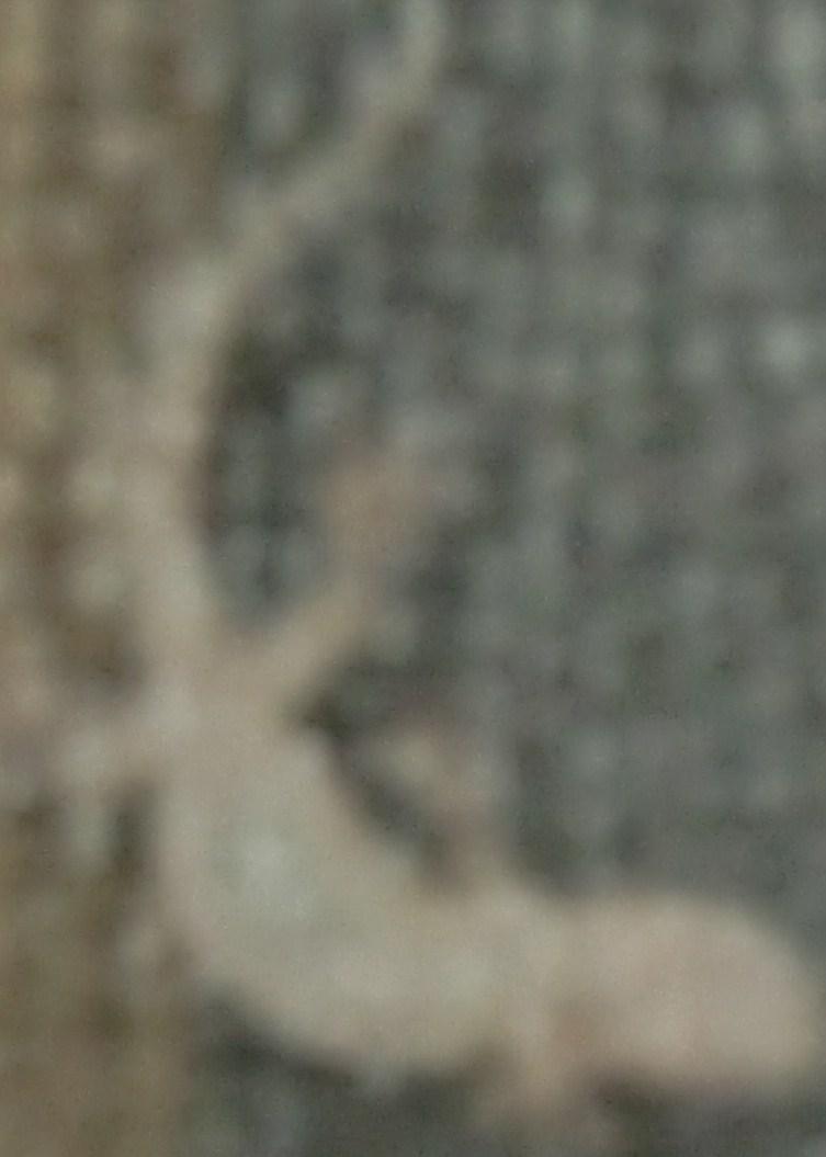 a0136720_1621164.jpg