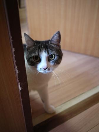 猫のお友だち ミーちゃん編。_a0143140_23113074.jpg