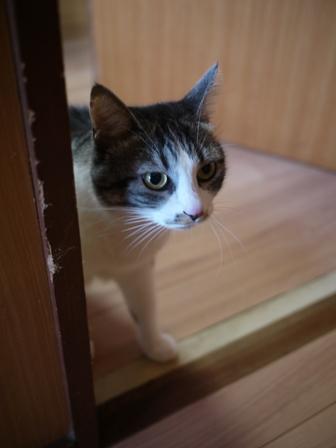 猫のお友だち ミーちゃん編。_a0143140_23121776.jpg