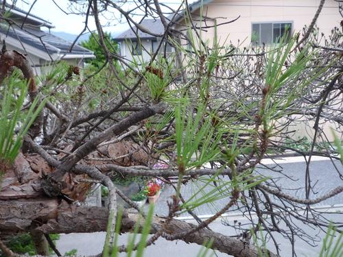 樹勢回復治療_c0112447_14251784.jpg