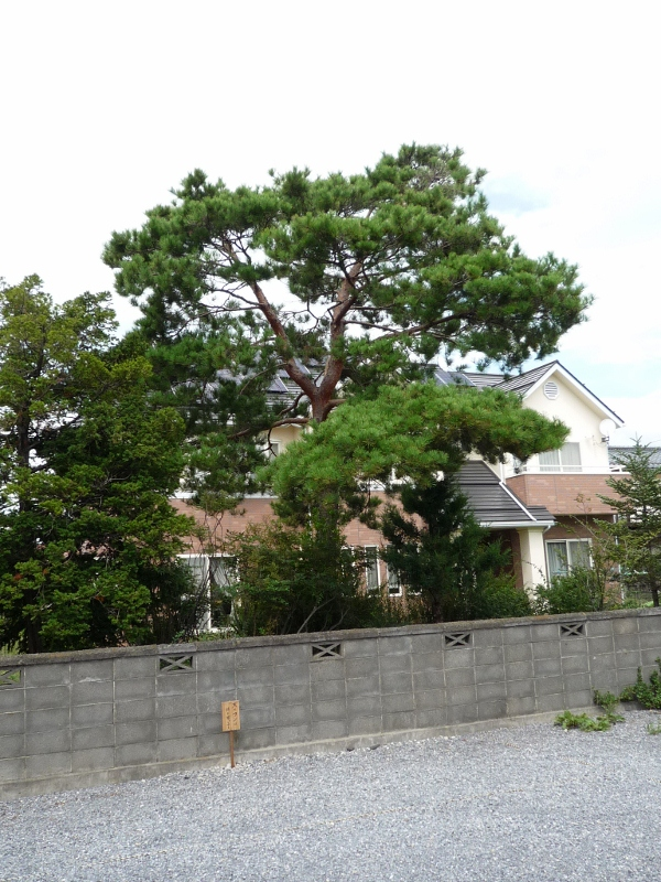 樹勢回復治療_c0112447_1425344.jpg