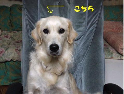 c0214455_16533745.jpg
