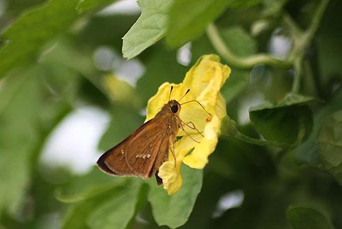 カンナと蝶と雨の日のお遊び_f0030085_20231059.jpg