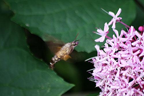 カンナと蝶と雨の日のお遊び_f0030085_2025755.jpg