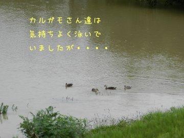 f0205887_19205971.jpg