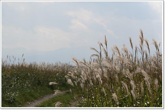 石狩はまなすの丘公園(9・16)_f0146493_23313385.jpg