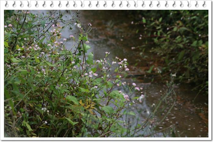 石狩はまなすの丘公園(9・16)_f0146493_23325952.jpg