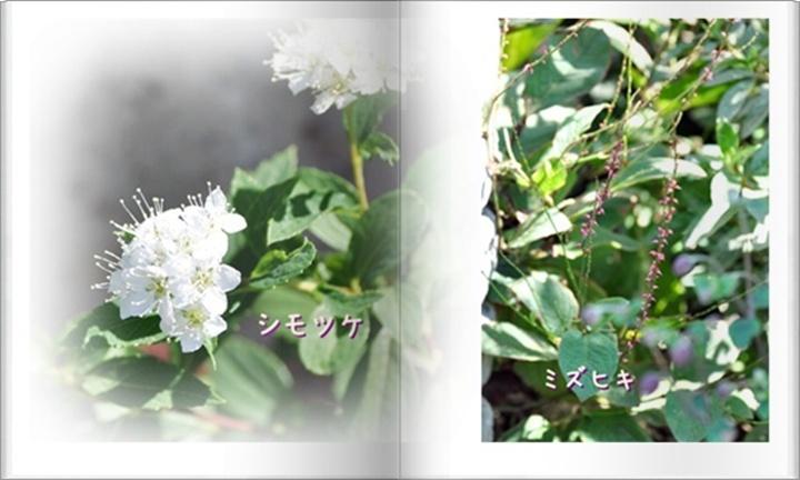 f0176499_938949.jpg