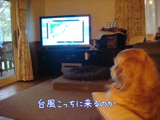 台風15号_f0064906_17571743.jpg