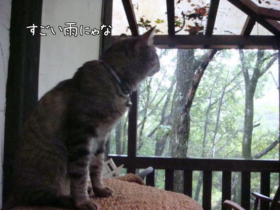 台風15号_f0064906_1759577.jpg