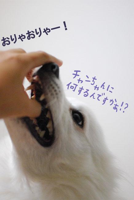 d0212419_213392.jpg