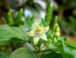 有用植物の目立たぬ小花たち_a0043520_19422658.jpg