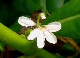 有用植物の目立たぬ小花たち_a0043520_19431181.jpg