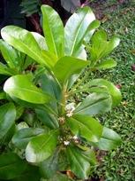 有用植物の目立たぬ小花たち_a0043520_1943312.jpg
