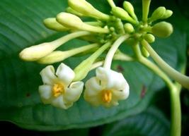 有用植物の目立たぬ小花たち_a0043520_19435962.jpg