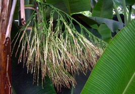 有用植物の目立たぬ小花たち_a0043520_19444175.jpg