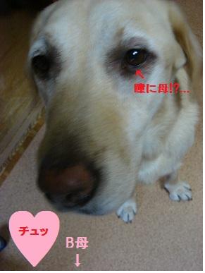 b0226221_933952.jpg