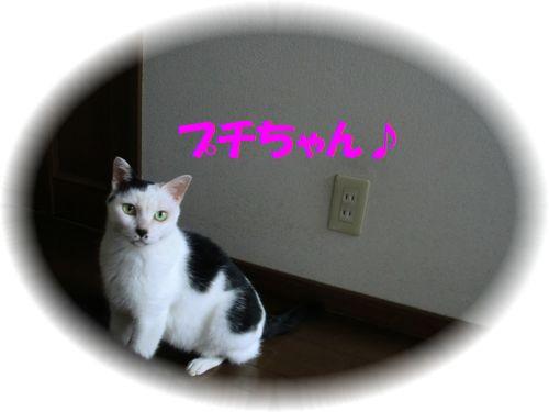 b0206444_13163834.jpg