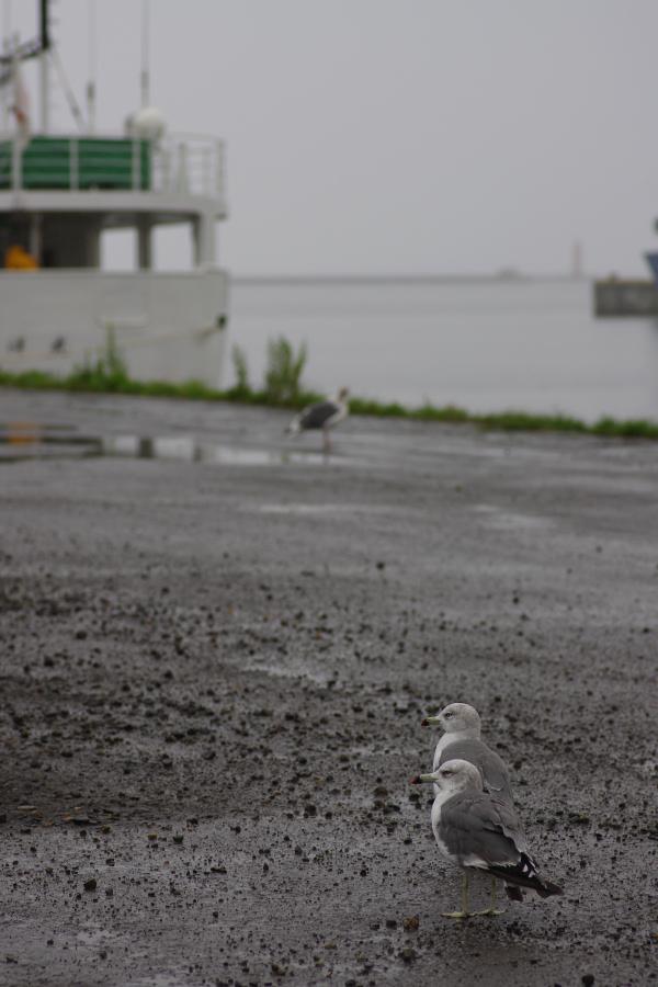 雨の2号埠頭_e0051186_19351348.jpg