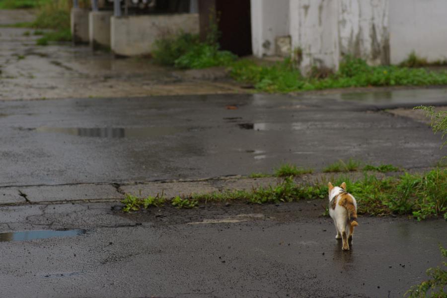 雨の2号埠頭_e0051186_19352923.jpg