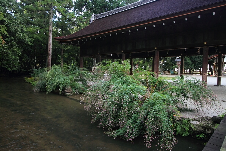上賀茂神社_e0051888_124963.jpg