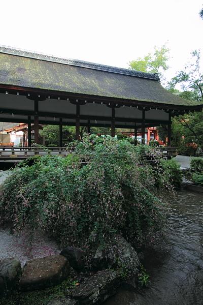 上賀茂神社_e0051888_13230.jpg