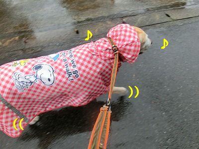 台風でお散歩が・・・_e0222588_1653811.jpg