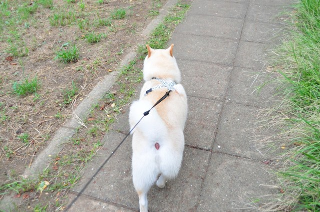 ドキドキかぼちゃん_a0126590_20592333.jpg
