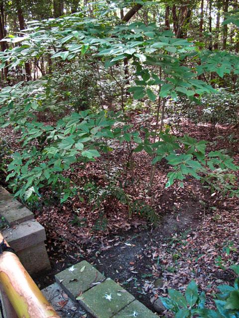 みちくさ学会記事「明治神宮「清正の井」から流れだす川とその先の暗渠。」補完_c0163001_9271048.jpg