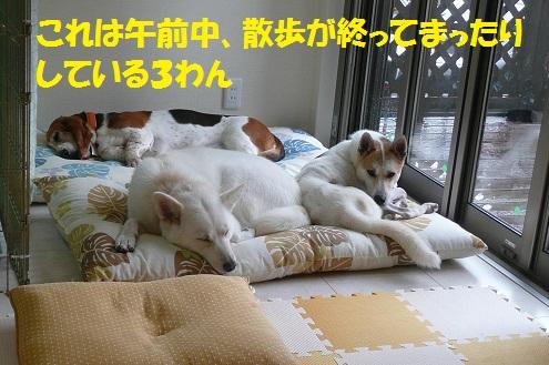 f0121712_18344192.jpg