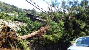 台風一過_e0234016_1818769.jpg