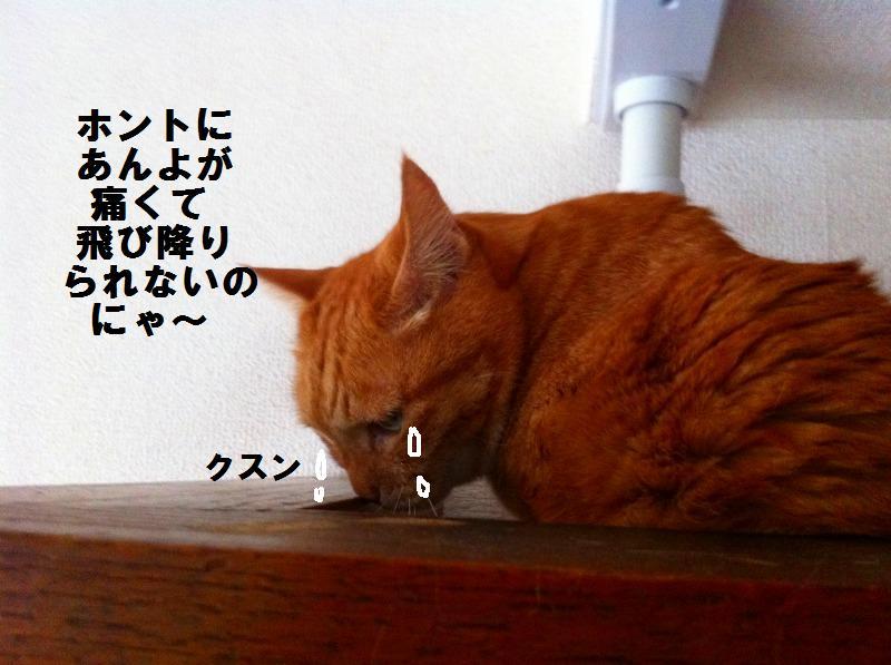 a0147921_172840.jpg