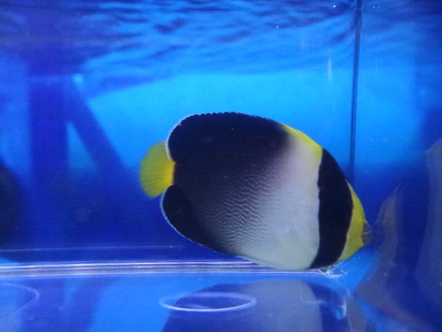 海水魚・熱帯魚・水草・金魚_f0189122_137342.jpg