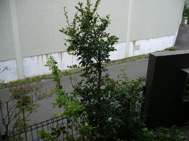 台風の被害_d0000324_13444767.jpg