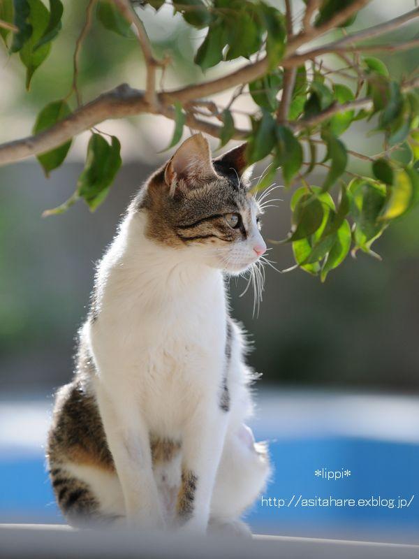 日本の猫と同じですね_b0024758_21342587.jpg