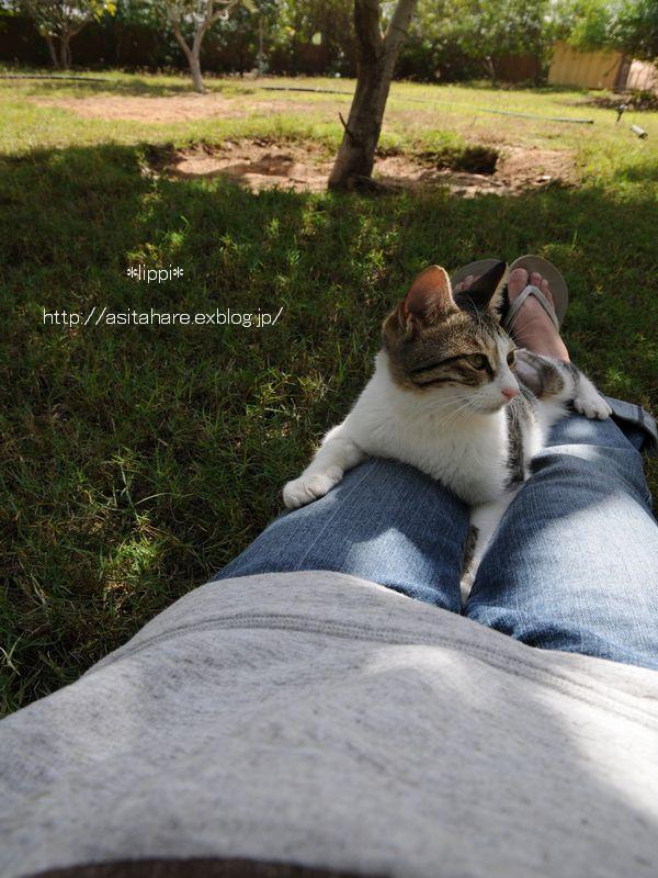 日本の猫と同じですね_b0024758_21363438.jpg