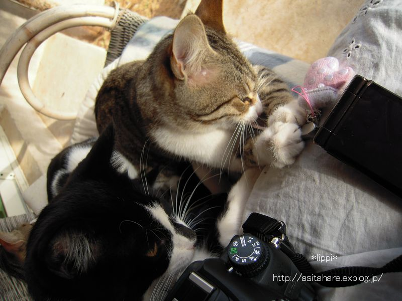 日本の猫と同じですね_b0024758_21371692.jpg