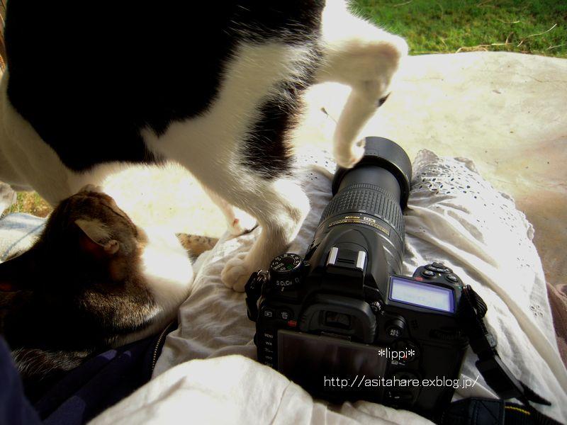 日本の猫と同じですね_b0024758_2138099.jpg