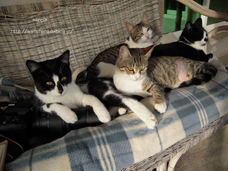 日本の猫と同じですね_b0024758_21382350.jpg