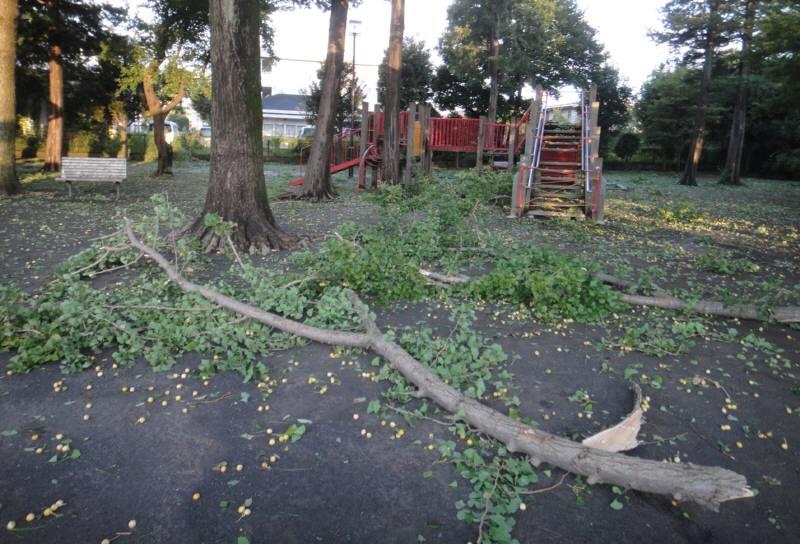 台風15号による樹木被害状況_f0059673_8331824.jpg