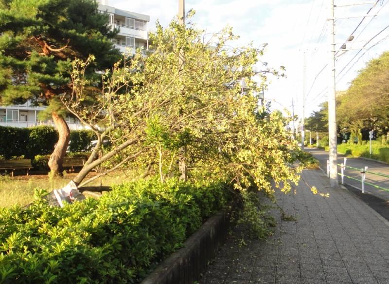 台風15号による樹木被害状況_f0059673_8343018.jpg