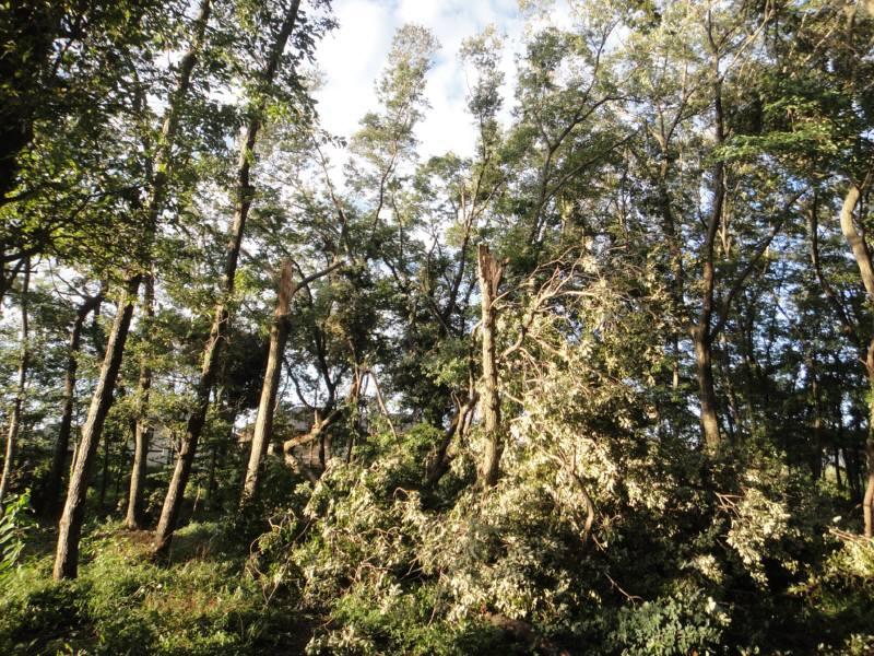 台風15号による樹木被害状況_f0059673_8362919.jpg