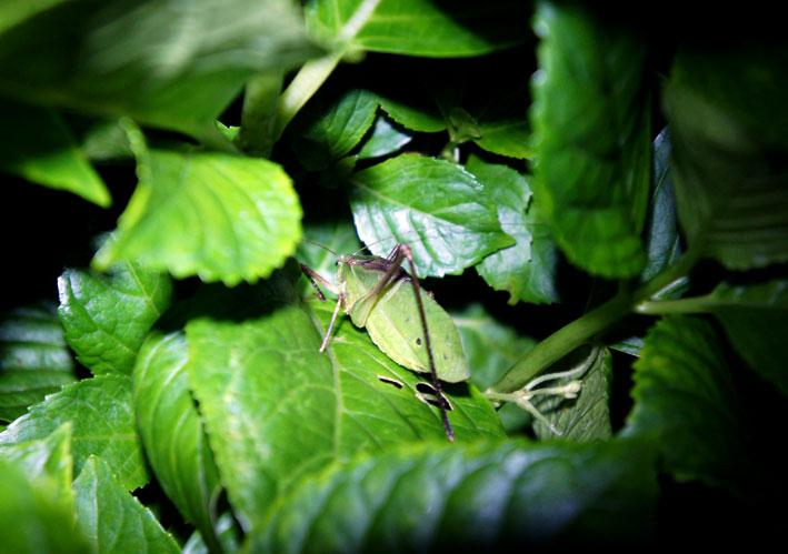秋の虫_b0145296_7321290.jpg