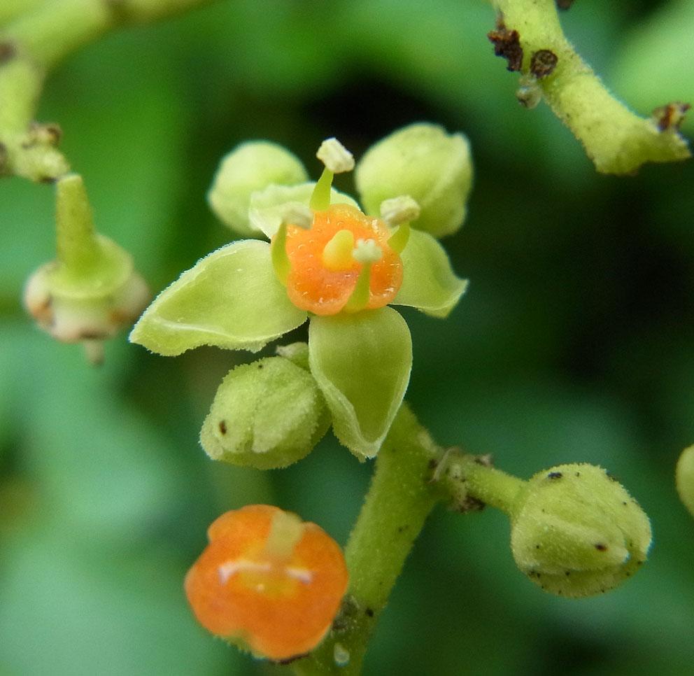 つる植物の話-4_d0163696_19402496.jpg