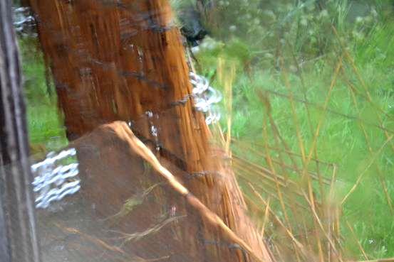 暴風雨です。_c0119197_10312914.jpg